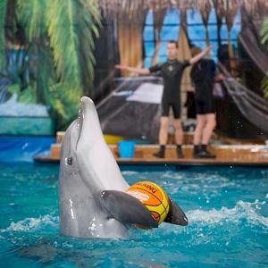 Дельфинарии, океанариумы Всеволожска