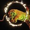 Цирки в Всеволожске