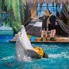 Дельфинарии, океанариумы в Всеволожске