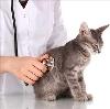 Ветеринарные клиники в Всеволожске